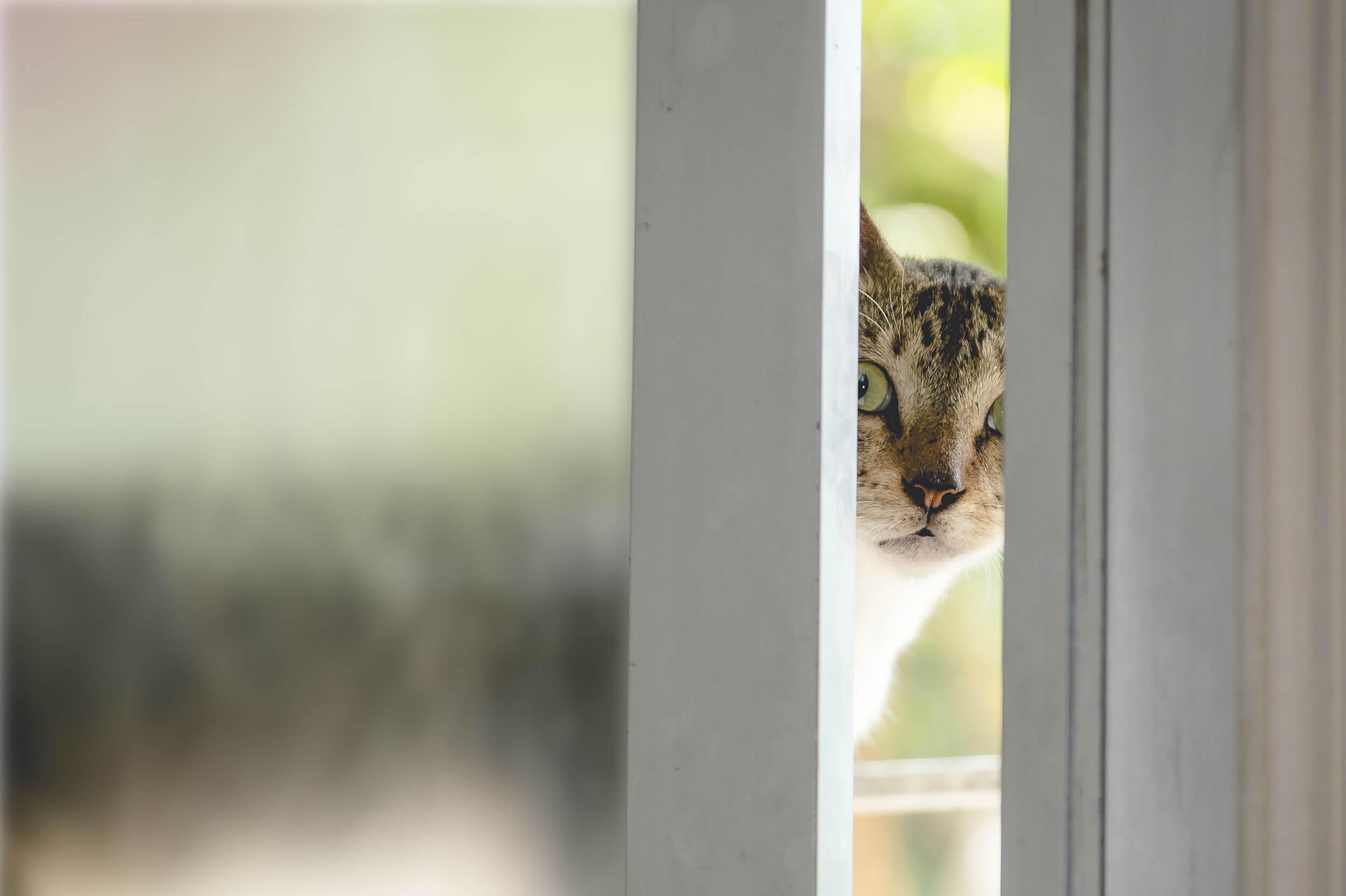 A cat peering through a slightly open window